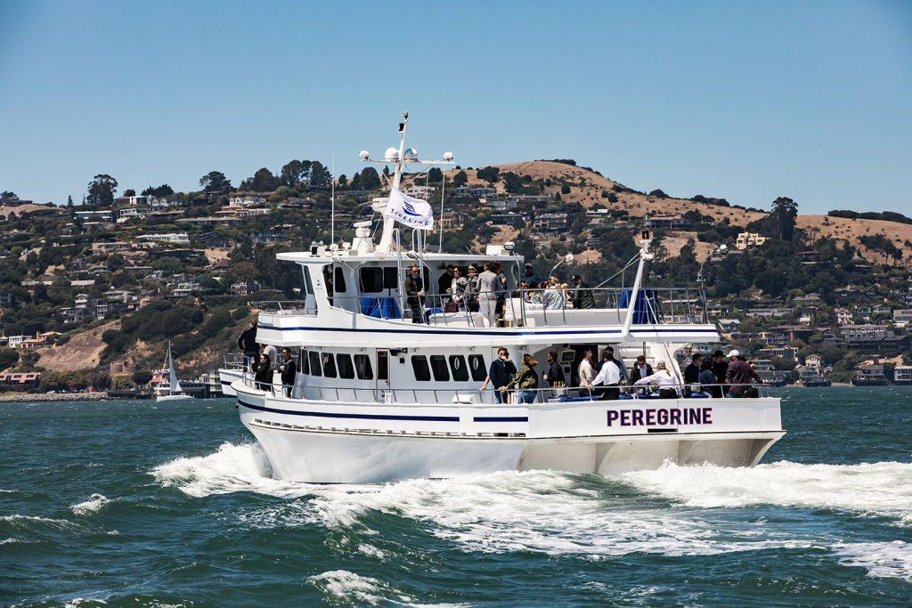 Peregrine Cruise